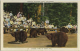 Sequoia National Park, California; Dinner Time at Bear Hill